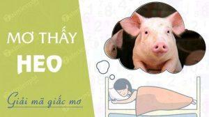 Mơ thấy lợn con nên đánh con gì
